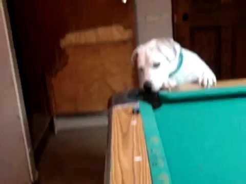 次々とシュートを決めていくハスラー犬の動画