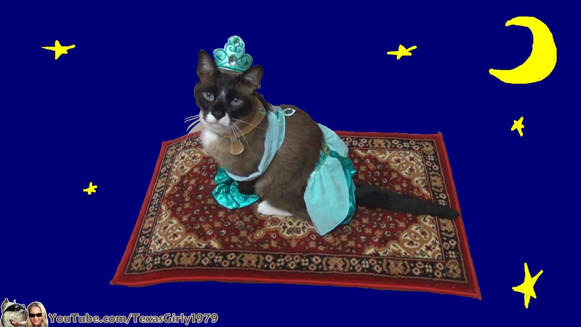 アラジンのコスプレで魔法のじゅうたんに乗る猫が可愛い動画