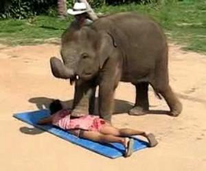 ゾウの足と鼻を使った全身マッサージ動画
