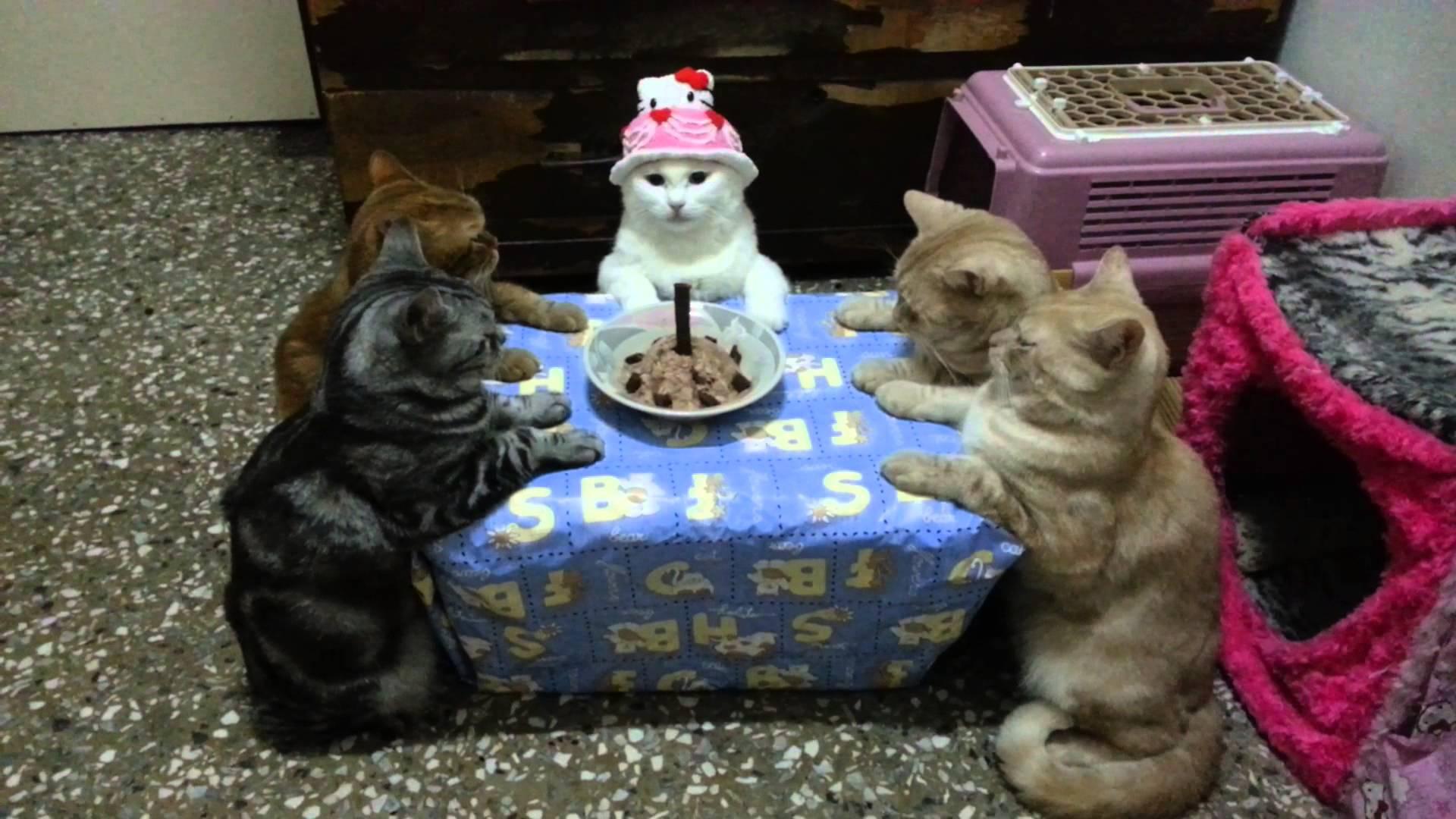 飼い主と行う猫達の誕生日パーティの姿が可愛すぎる