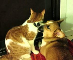 イチャイチャっぷりが半端無い仲良しな犬と猫