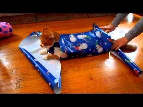 クリスマスプレゼントみたいにラッピングされちゃう猫