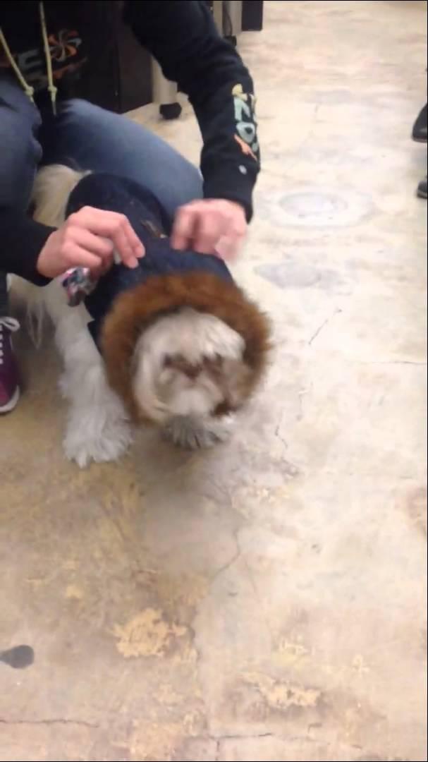 無言の抵抗? 服を着せられた犬の凹みっぷりがすごい動画