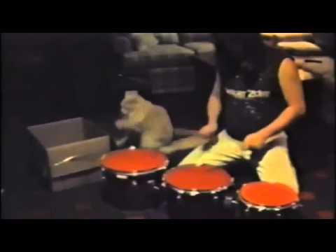 ダンボールを使ってドラマーとセッションする猫