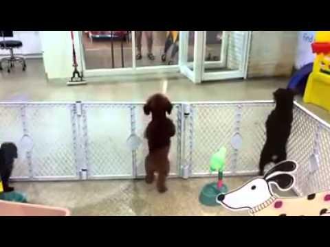 飼い主のお迎えに興奮した犬がとても可愛い動画