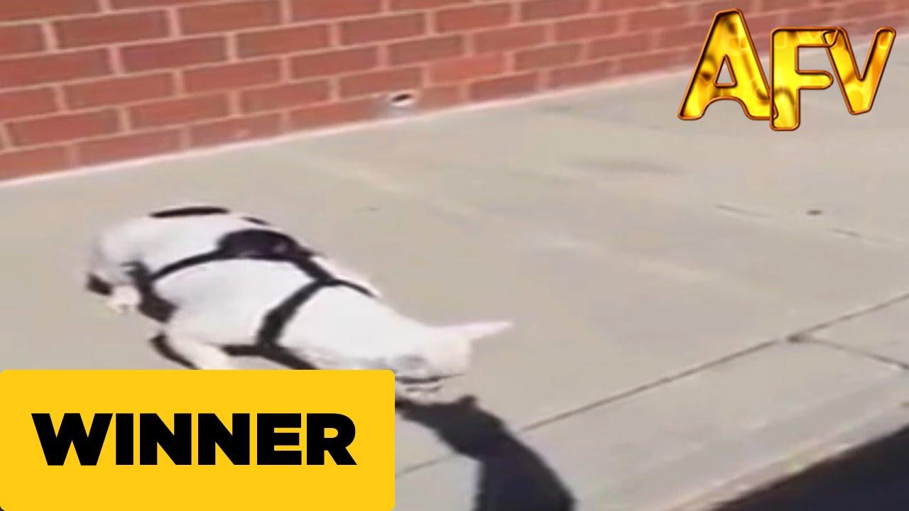 犬の影絵に喧嘩を売るフレンチブルドッグ