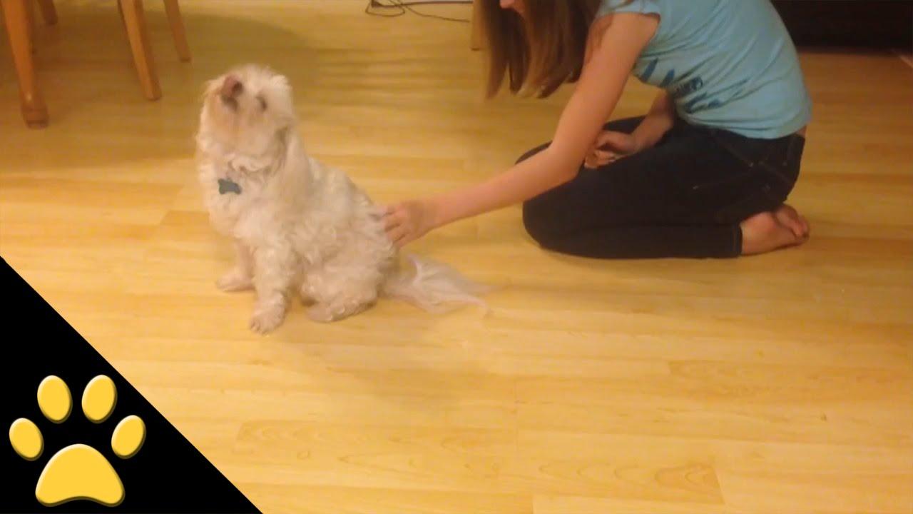 お尻をワシワシされると変な挙動になる犬が面白い