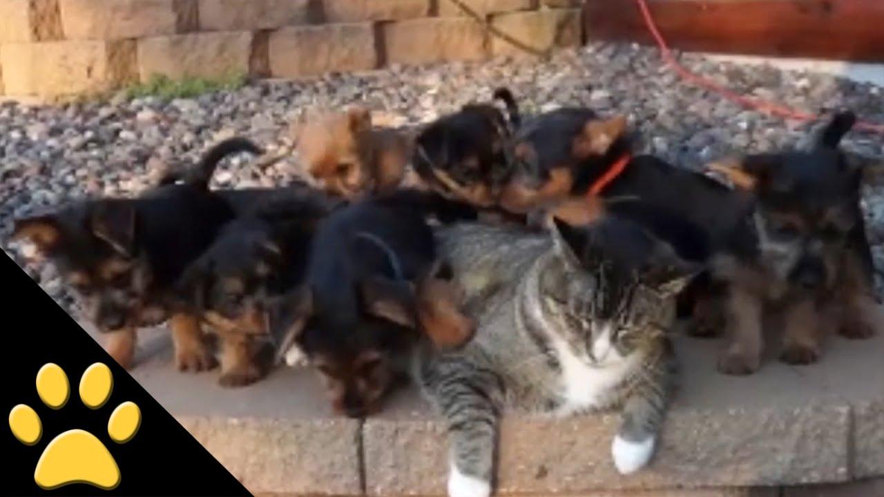 この猫と代わりたい! 大量の子犬にまとわりつかれる猫
