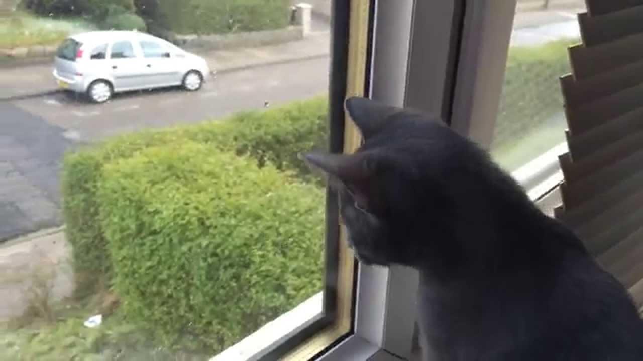 初めて雪を見た子猫の反応がむちゃくちゃ萌える動画