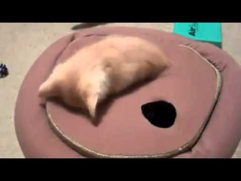 モグラ叩きみたく穴から出てくる子猫が可愛すぎてたまらない動画