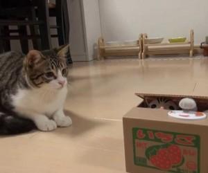 猫が出てくる貯金箱と戯れる猫が可愛すぎ!