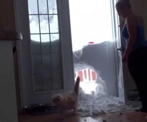 雪がつもっているところで猫を呼ぶと凄い方法で登場してきた