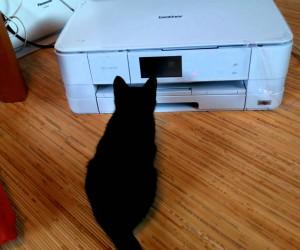 プリンターにちょっかいを出していた猫がまさかの事態に……