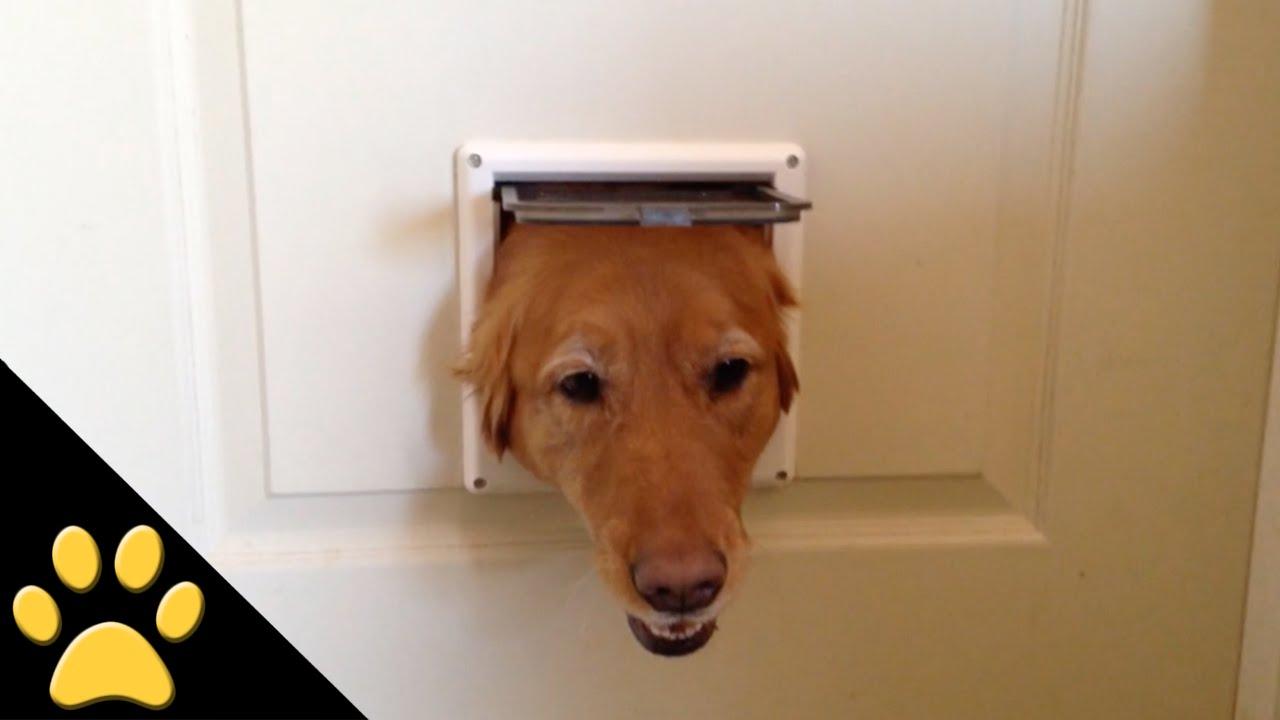 小さいドアから代わる代わるでてくる犬