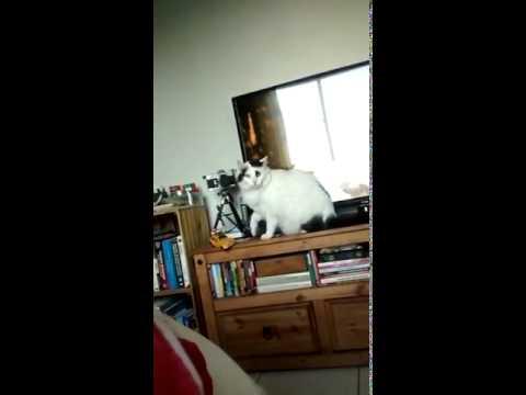 すごく賢いかもしれない、聞き分けの良い猫