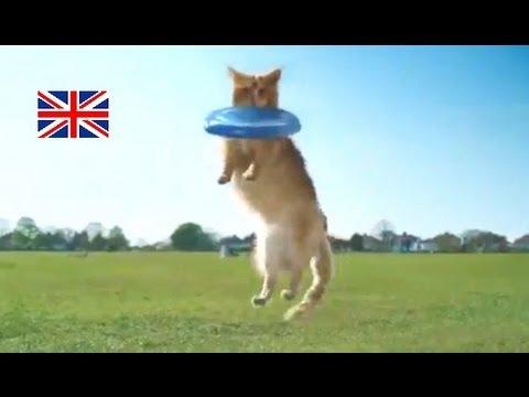 猫が犬みたいな行動をとったら……?