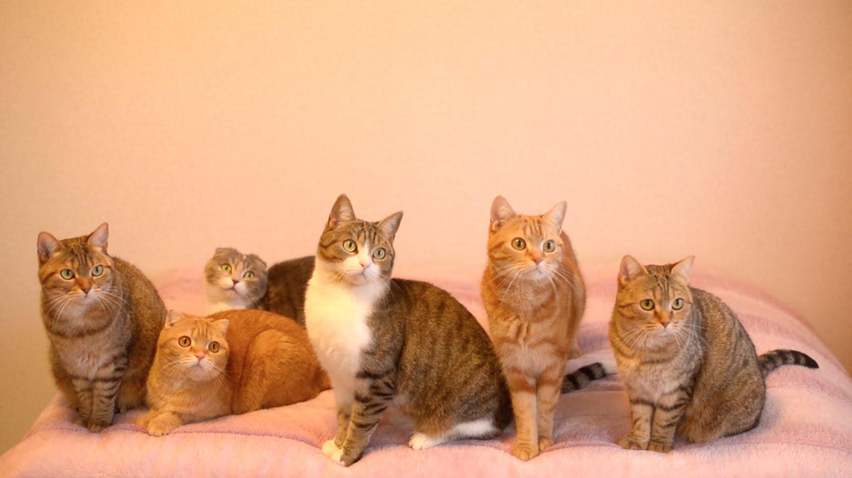 ピッタリと息の合った動きで首ふりダンスをする猫の家族