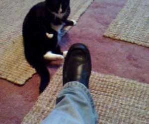 かなり本格的なパンチを繰り出す猫がシュール
