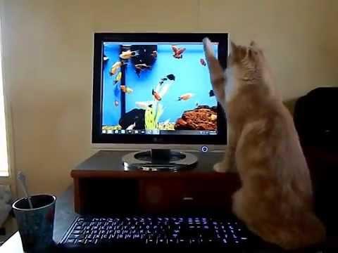 ディスプレイに表示される魚が気になって仕方ない猫