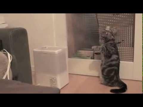 加湿器からでてくる湯気がすごく気になる猫
