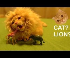 ライオンっぽいコスプレをした猫がキュート!