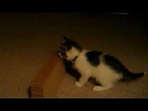 子猫と遊んでいるときに偶然起こった可愛すぎなハプニング