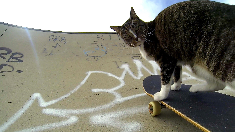 スケボーに乗りながらジャンプまでこなす天才猫