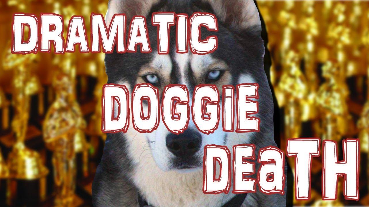 名俳優犬!? ピストルで撃たれたふりをする犬の名演技