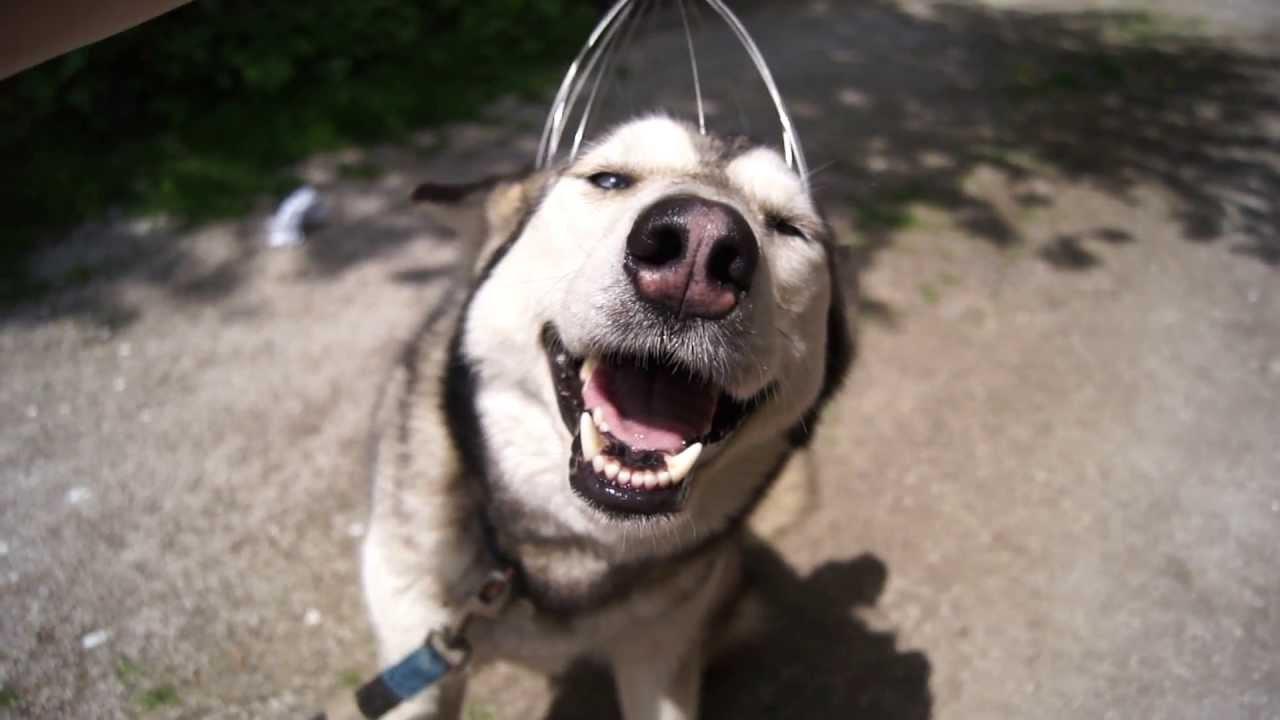 頭皮マッサージをされる犬の表情がおもしろい