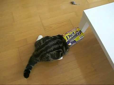 隙間を見つけると我慢できずに滑り込んでしまう猫