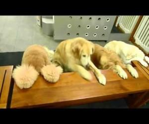 行儀よすぎてびっくりする犬達の食事風景