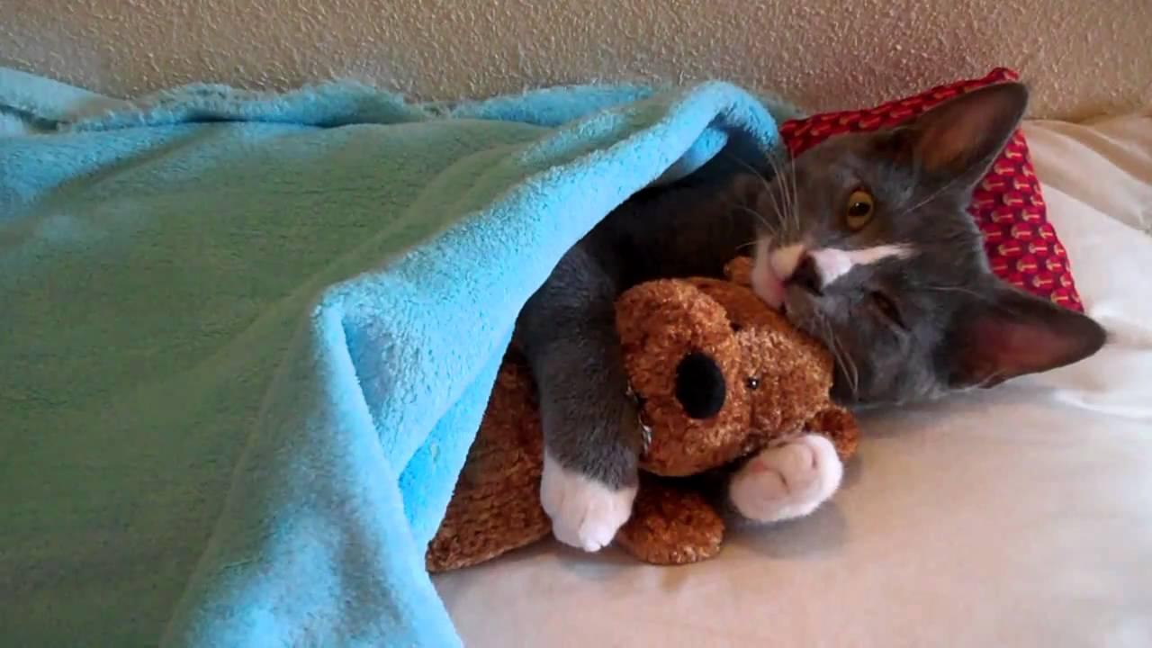 これは可愛すぎ! ぬいぐるみを抱きしめて寝転ぶ猫