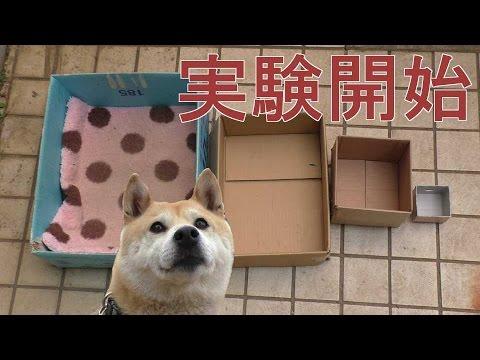 箱に入るのが好きな犬。箱を段階的に小さくしていくと……