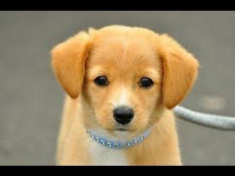 ギネスに載った世界一賢い犬の動画が衝撃的!