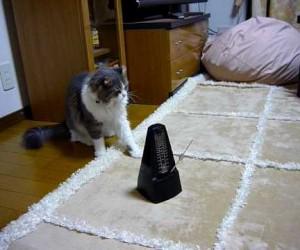 メトロノームにつられてロボットダンスみたいになっている猫