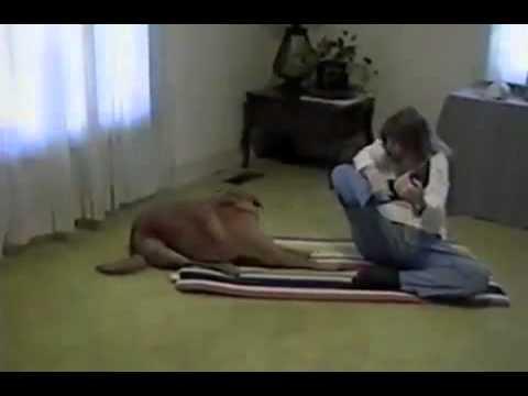 「それはこうやるんやで」飼い主にヨガのポーズを決め顔で見せつける犬