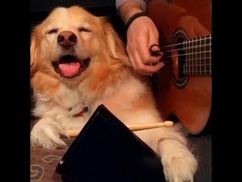 様々な楽器を演奏する犬とのセッション動画