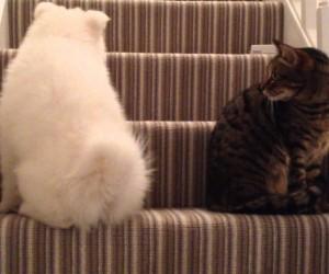 犬と猫が出会ってから仲良くなるまでを早送りで