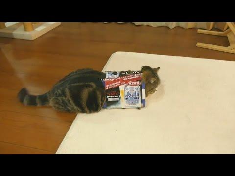 既に箱に入っている猫の目の前にもう一つ箱を置くと……