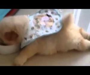 怠惰すぎる……寝転んだままご飯をむさぼる子犬
