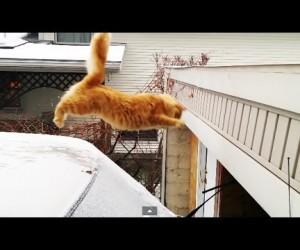 可哀想だけどちょっと笑ってしまうジャンプ大失敗の猫