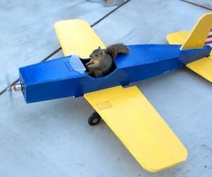 どうなってんのこれ!? リスが飛行機模型を運転