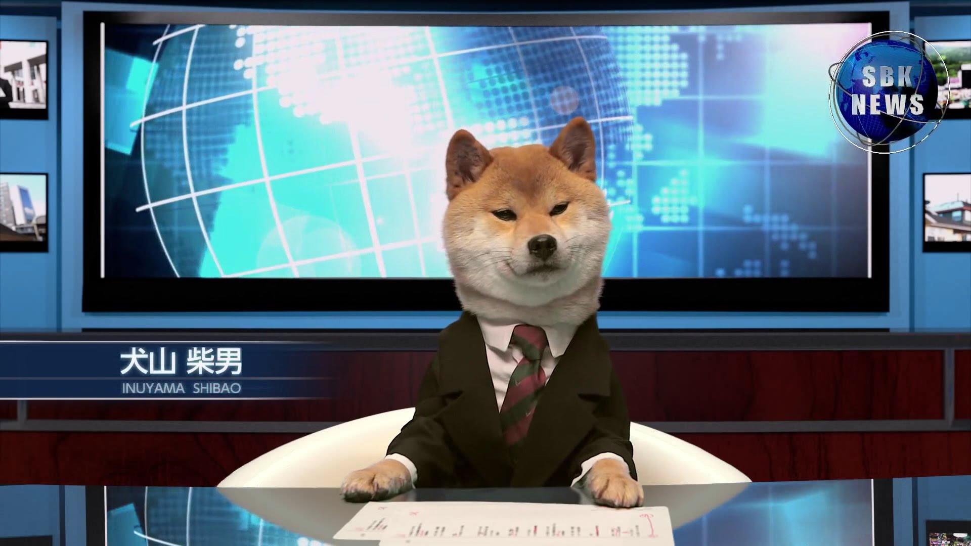 柴犬の犬山柴男キャスターがつとめるニュース番組が可愛すぎる!