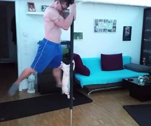 飼い主が部屋でポールダンスをすると飼い猫はこうなる