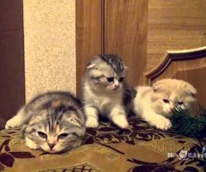 見ているほうも釣られそうな、あくびが伝染する子猫たち