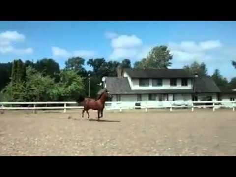 脱柵だぁ~! 斜め上の方法で脱柵する馬