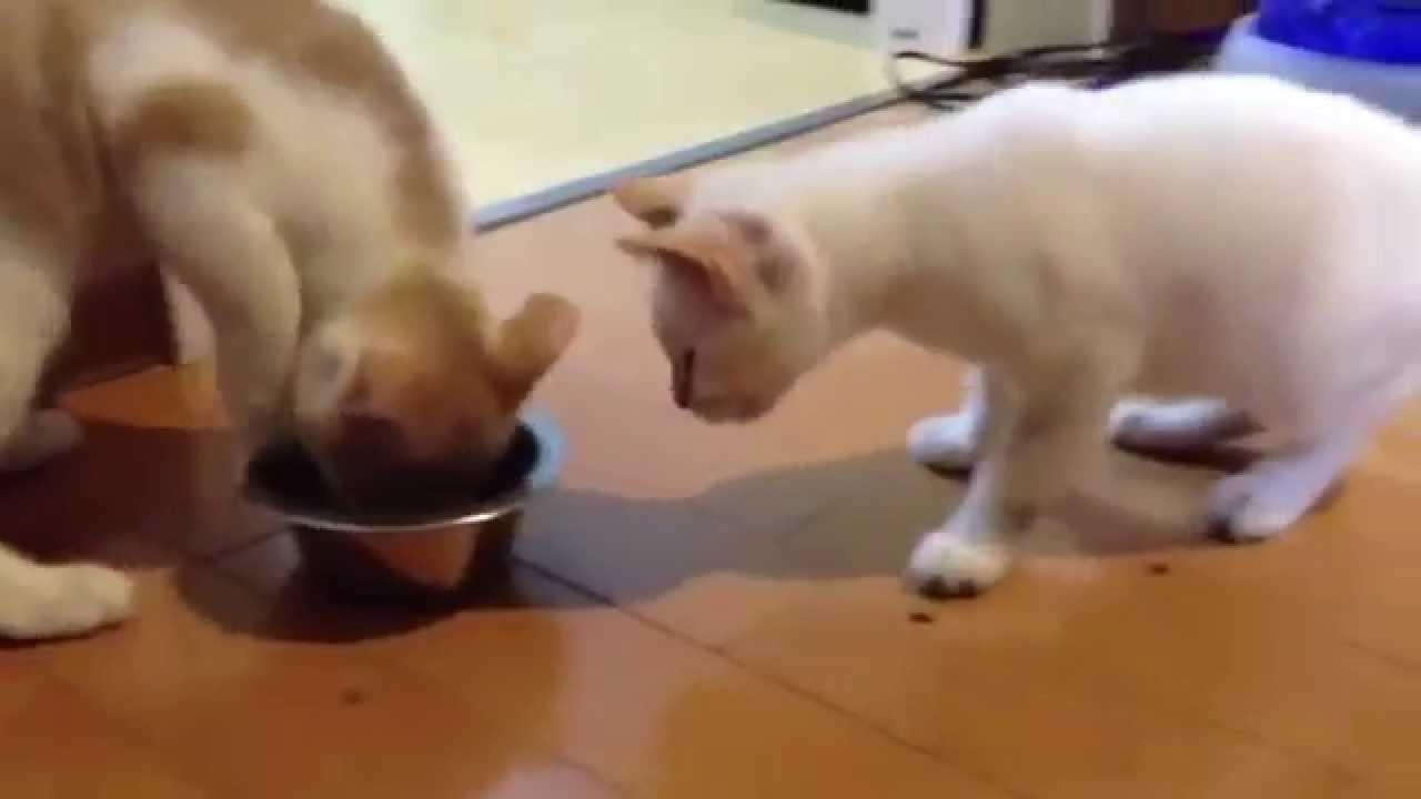 【猫動画】ご飯を譲り合いながら食べる猫ちゃんたち