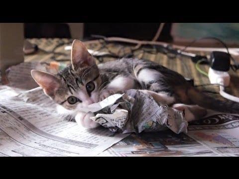 【猫動画】新聞を読ませてくれない子猫