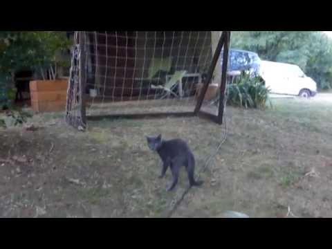 ジャンピングブロック! 鉄壁の防御を誇るゴールキーパー猫