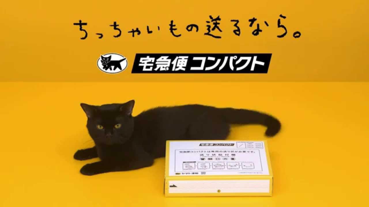 黒猫が組み立てるクロネコヤマトの宅急便箱
